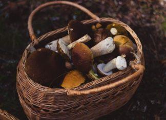 Jak marynować grzyby?