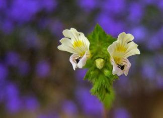 Zasady przesadzania kwiatów